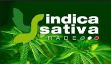 Equilibrium a Indica Sativa Trade